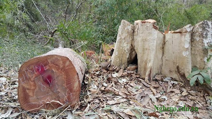 Lõi gỗ sơn huyết