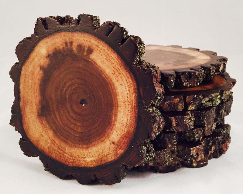 Một lát từ thân gỗ óc chó