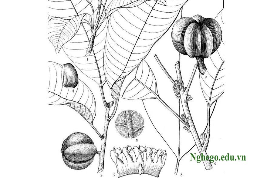 Hoa quả