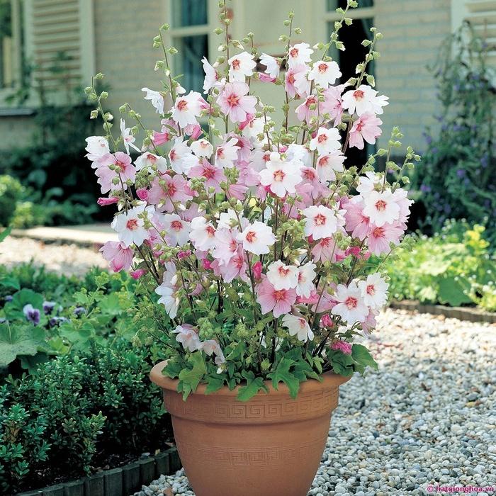 Với tán lá rộng, um tùm, loại cây này sở hữu ý nghĩa no ấm cho gia đình, tài lộc sẽ thường xuyên tới có bạn.